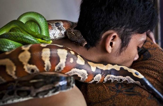 snake-spa-2